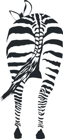 afrika: Zebra - vector illustration front view, black and zero Illustration