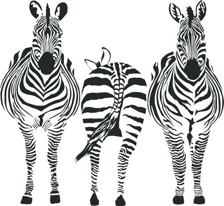 illustration of three zebras, two front, one rear Stock Vector - 10118835