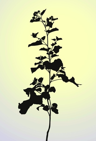 Vector illustration of plants, silhouette Arctium lappa