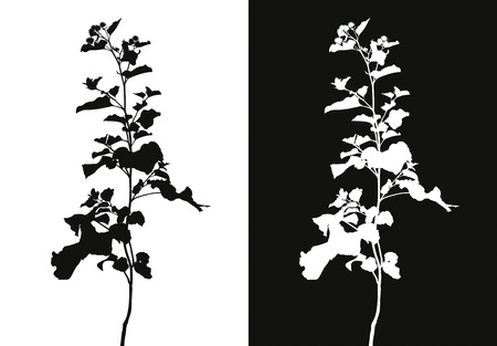 herbage: Flowers and leaves of burdock on a black and white background