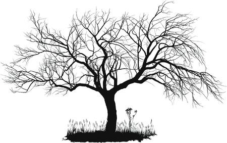古いりんごの木のベクトル描画  イラスト・ベクター素材