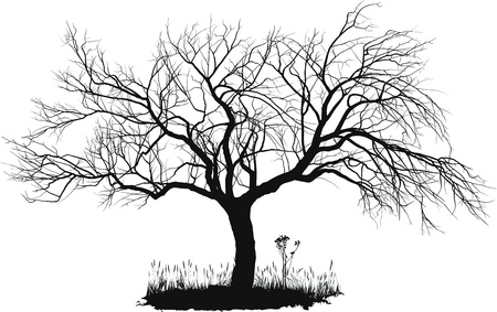 arboles blanco y negro: dibujo de un viejo Manzano vectorial