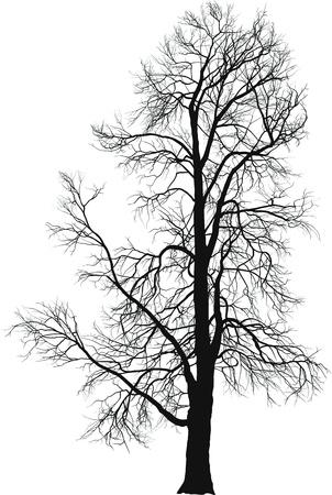 Illustrazione vettoriale di castagno in inverno