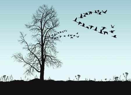 formations: Vector illustratie van de herfst landschap met kastanje en wilde ganzen