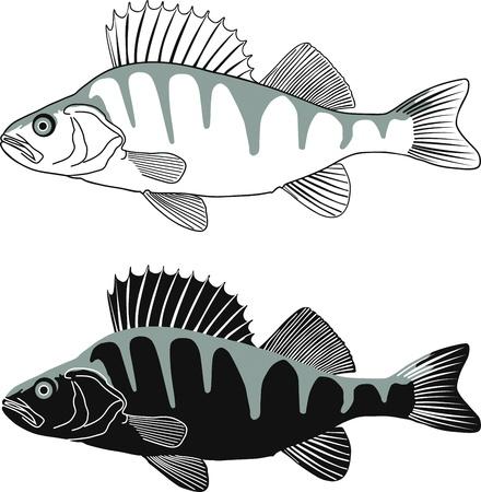 Zwart-wit illustratie Perch, geïsoleerde vector Vector Illustratie