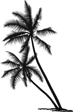 tall tree: black and white vector illustration of two palms