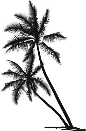 beaux paysages: illustration vectorielle en noir et blanc de deux palmes