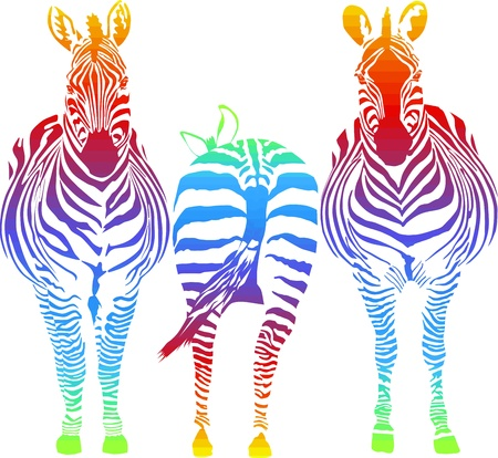 zebra: vector illustration of three rainbow in the zebra, two front, one rear