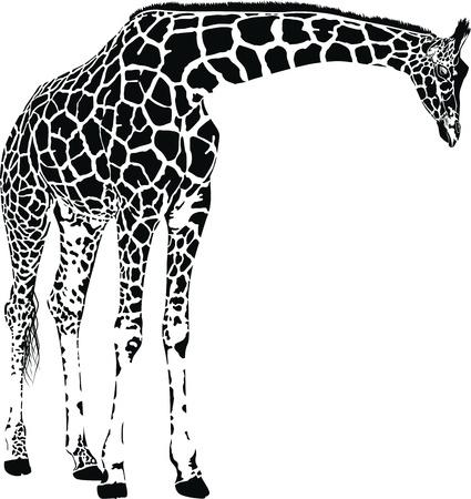 Giraf met stippen Stock Illustratie