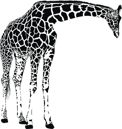 Giraffe with spots Illustration