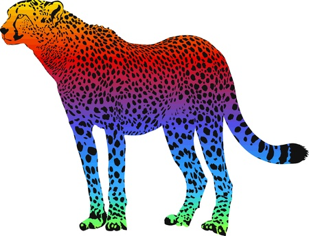 cheetah with rainbow smokescreen camouflage