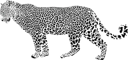 ヒョウ - 黒と白のベクトル イラスト