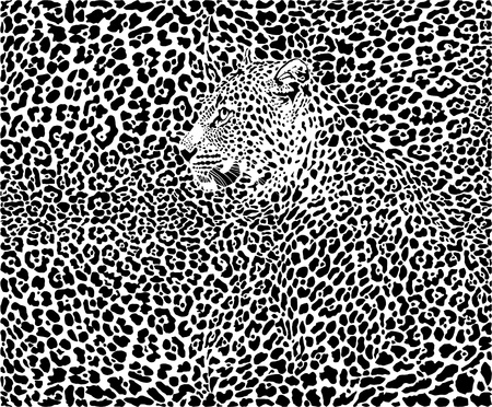 illustration pattern background leopard skins and heads Vector