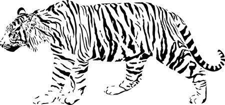 black and white illustration tiger Ilustracja