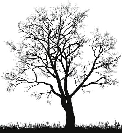 冬にクルミの木のイラスト  イラスト・ベクター素材