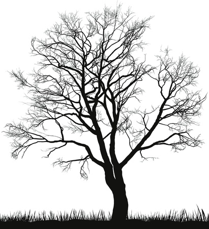 winter tree:   illustration of walnut tree in winter Illustration