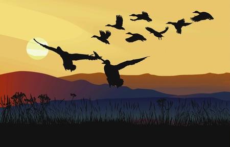 mallard: patos salvajes volando paisaje, al salir el sol en las montañas
