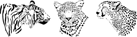 black and white illustration of the heads of large predatory feline predators