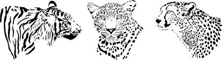 predatory: black and white illustration of the heads of large predatory feline predators