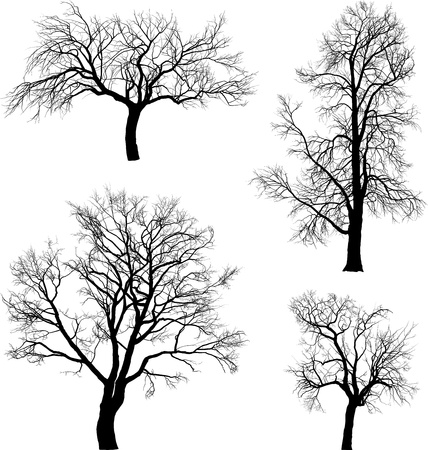 deciduous: illustration of tree walnut, chestnut, raspberry  and  apple in winter