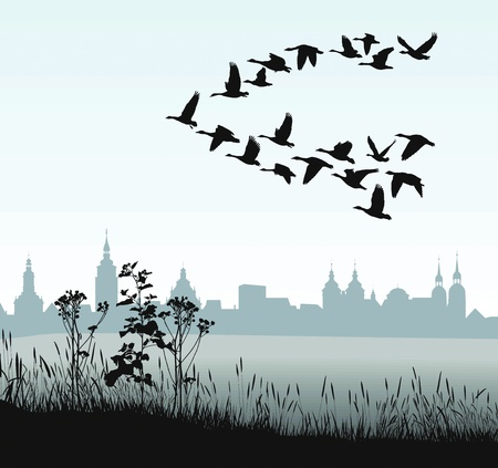 migrating animal: vector illustration of migratory wild goose silhouette of the historic town