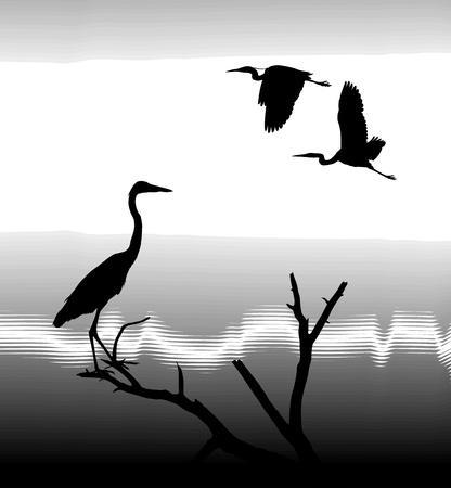 illustration silhouettes Herons on lake shore Vector