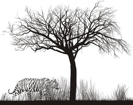 hoog gras: illustratie Tijger in hoog droog gras onder een boom Stock Illustratie