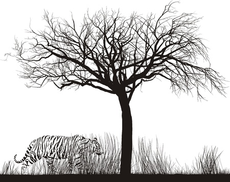 dry grass:  illustration Tiger in tall dry grass under a tree