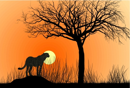 illustration cheetah on termite hill at sunset Vector