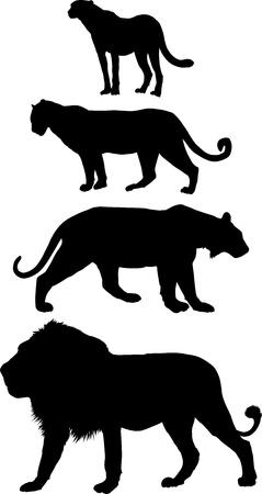 leopard cat:  illustration predators, lion, tiger, leopard and cheetah Illustration