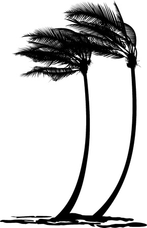 coconut palm: black and white vector illustration of two palms in the wind