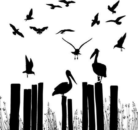 vector illustration flying seagulls and pelicans sitting