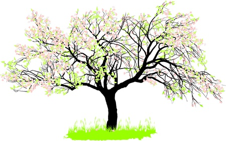 drawing of an old apple tree in spring Vector
