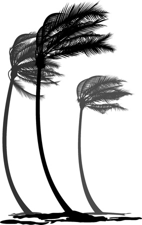 wind storm: black and white illustration of tree palms in the wind