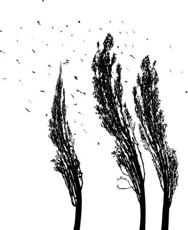 poplars: black and white illustration of tree poplars in the wind
