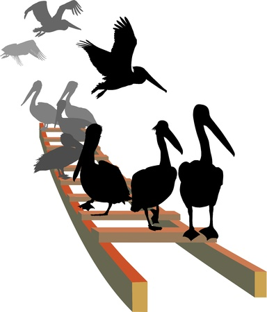 pelicans: illustration pelicans seated and  landing on the ladder
