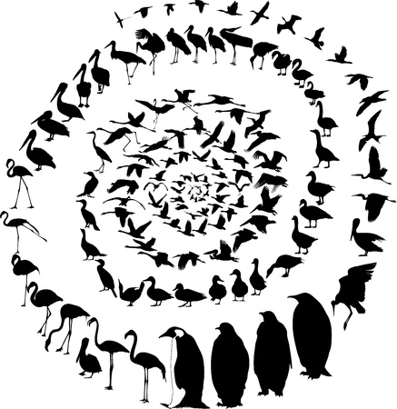 cormorant: Art illustration aquatic birds grouped into a spiral Illustration
