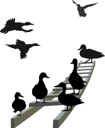 seated: illustration mallard seated and  landing on the ladder