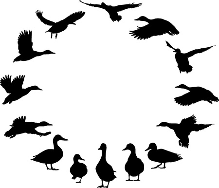 birds  silhouette: illustration of black silhouette of wild ducks in a circle Illustration