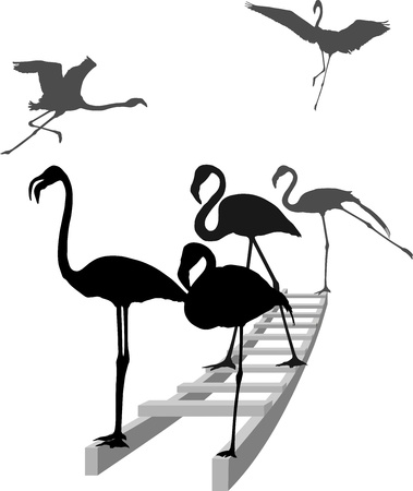 flamingos: Grayscale illustration of how flamingos standing on a ladder