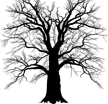 branched: black and white illustration of a branched oak old