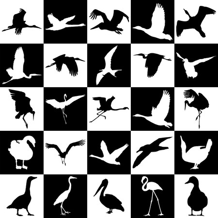 waterfowl: vector illustration of waterfowl on a background of black and white squares