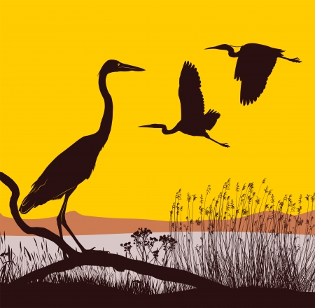 reeds: illustration herons on the lake at sunrise