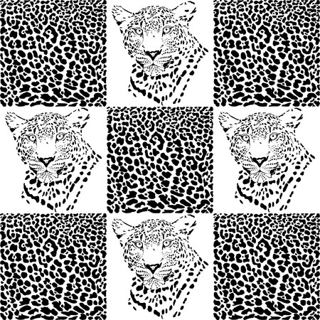 Vector illustration of a leopard and leopard fur Stock Vector - 24905583