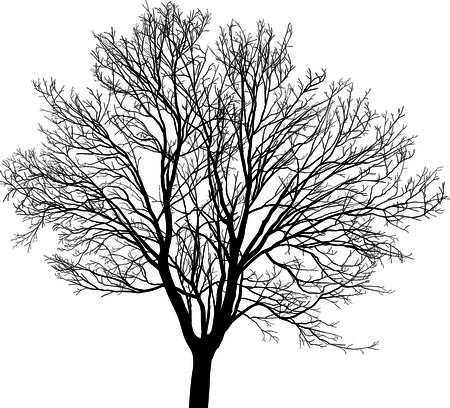 Silhouette maple tree, black drawings on a white background