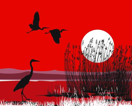 Reiher Illustration auf einem roten Hintergrund von Himmel und Wasser