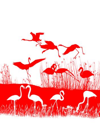 flamingi: Izolowane ilustracja stada czerwonych flamingów na brzegu