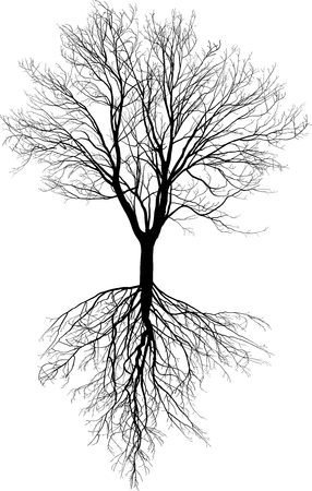 Illustration of a tree without leaves with roots  Vector