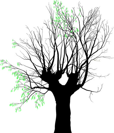 felling: Vector illustration of old tree on which expel young leaves