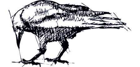 Hand pen drawn sketch illustration of crow